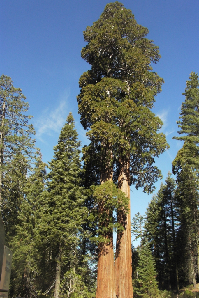 10 Highest Trees of the Planet (3)