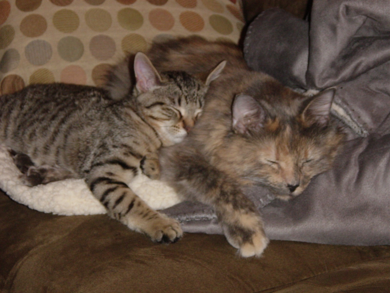 30 Adorable Photos Of Mother Cats Cuddling With Their