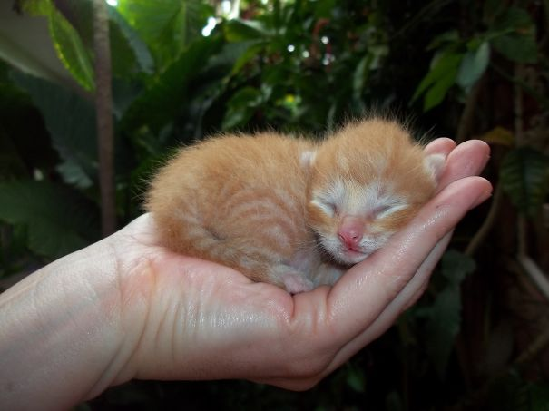 Kitty In Palm