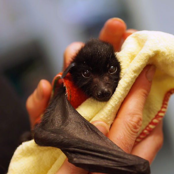 Baby Bat In Palm
