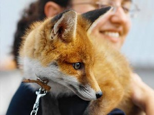 10-Wild-Animals-That-Are-Becoming-Domesticated-Pets (1)