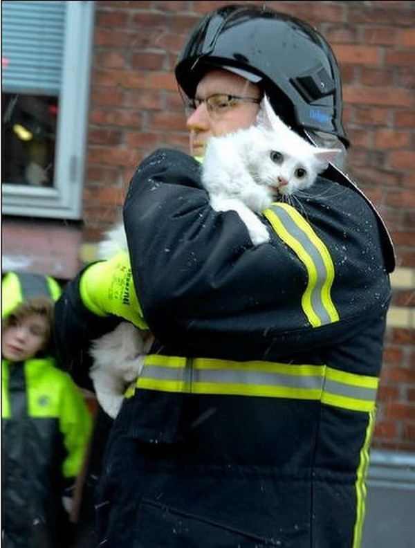 Helping a Cat