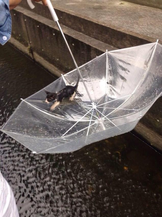 Man trying to saves cat from drowning using umbrella