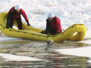 Dramatic-rescue-of-dog-fallen-into-icy-river