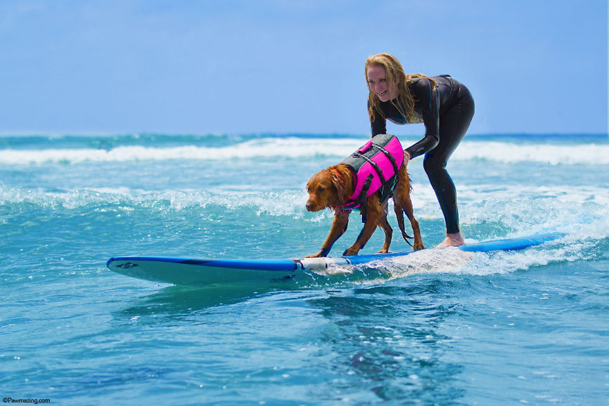 Woman surfing with a dog