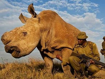 Protect Against Poachers