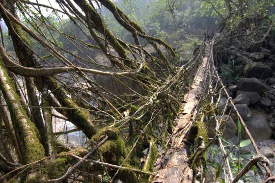 Rubber Tree Bridge
