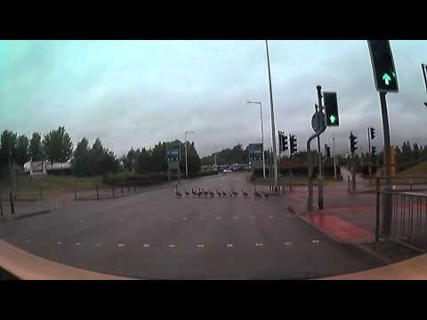 Officer Holds Traffic for a Family of Ducks Crossing a Busy Highway