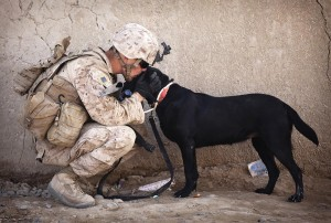 Military Dogs at Work
