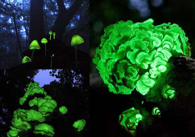 17. The Glowing Forest (Shikoku, Japan<br /> )
