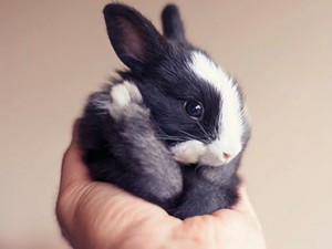 A-Squirmy-Newborn-Rabbit-Grows-Into-Fluffy-Baby-Bunny-Right-Before-Your-Eyes