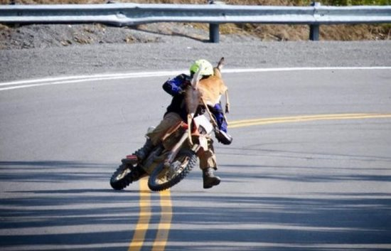 This isn't going to end well for anybody. At least the motorcyclist has a helmet, though.