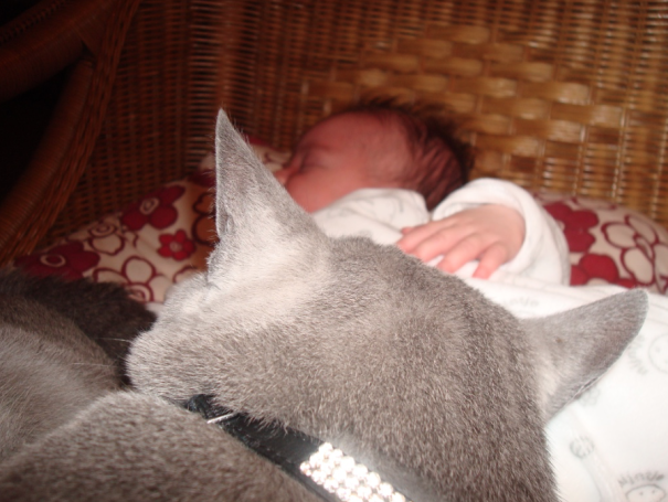 Our Russian Blue Cat Mister Beer Von Beerensteyn And Our First Born Baby Kiara