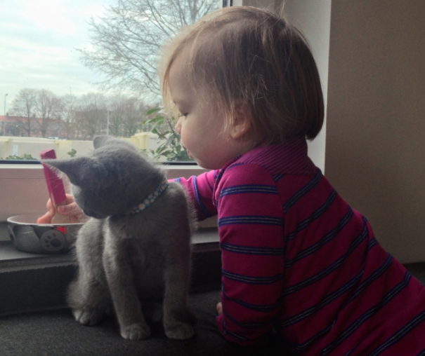 Russian Blue Kitten Boris Czar Romanov I And Our Daughter Learning To Eat (with A Fork)