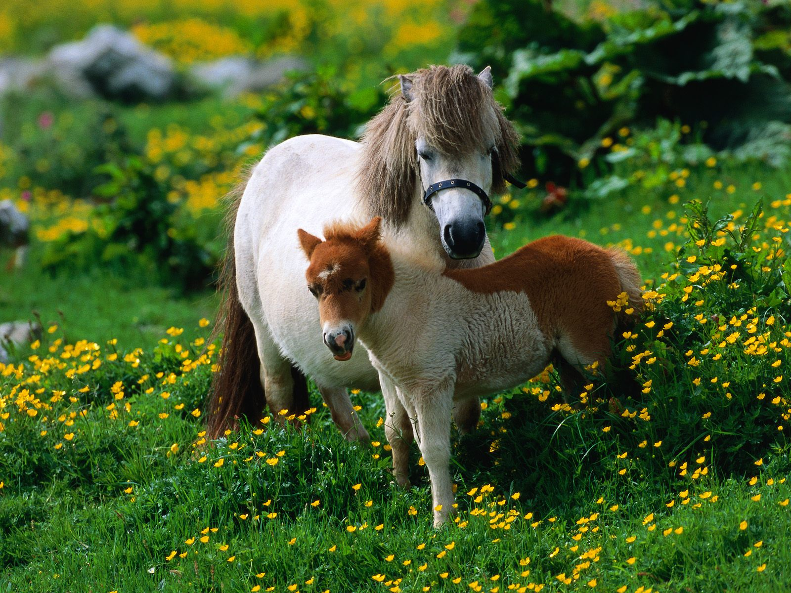Bonding Moment With Horses