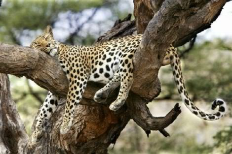 Sleeping Time Of Animals (5)