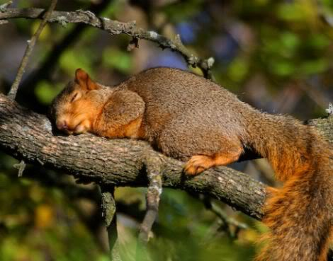 Sleeping Time Of Animals (6)