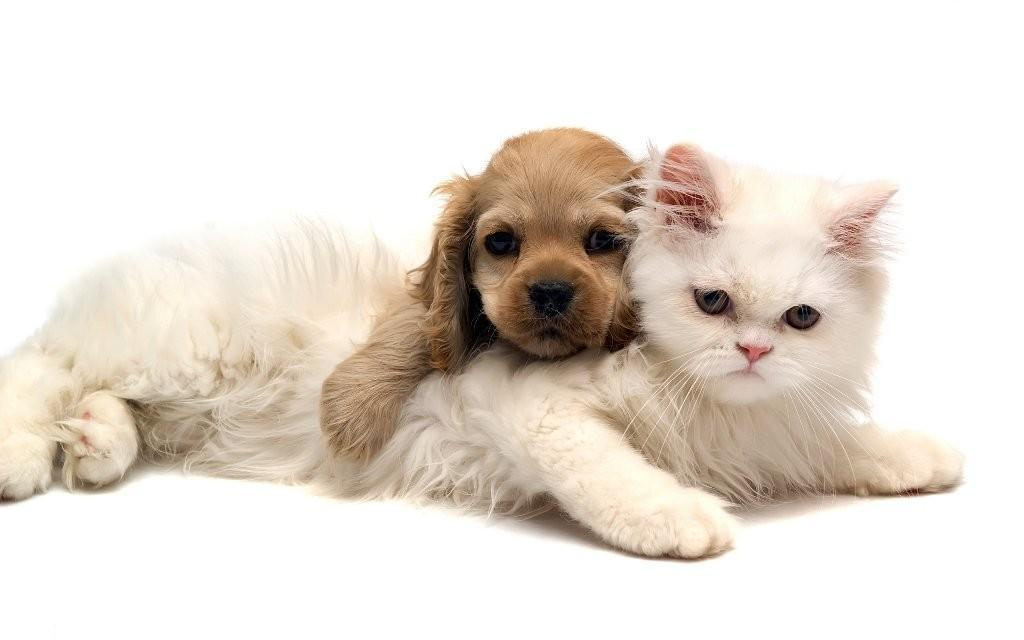 The Main Health Guide to Take Care of Your Pets (1)