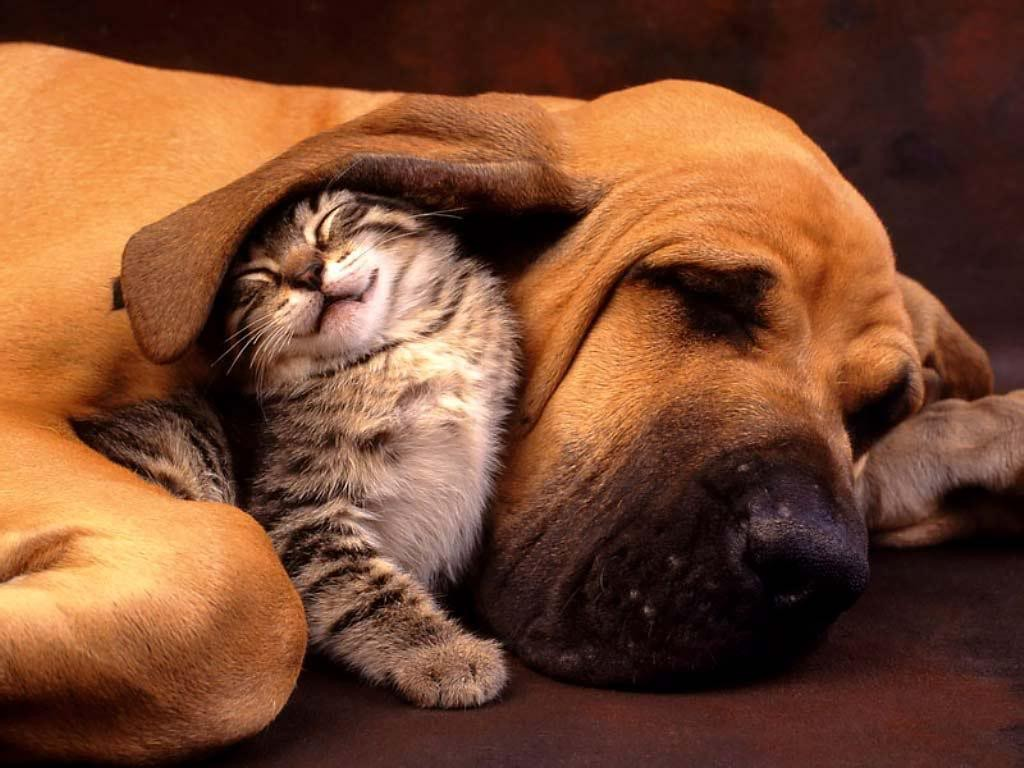 The Main Health Guide to Take Care of Your Pets (2)
