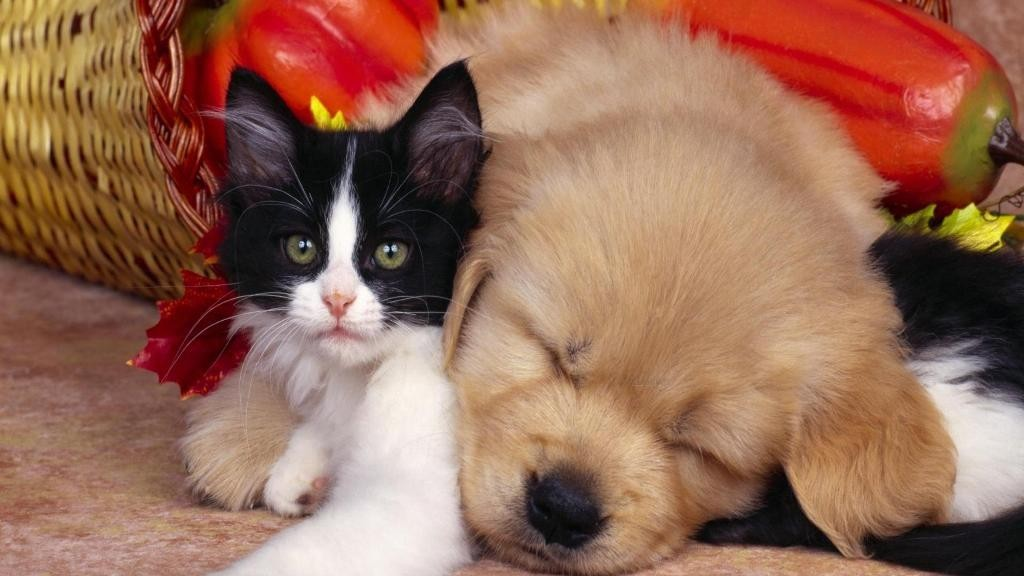 The Main Health Guide to Take Care of Your Pets (7)