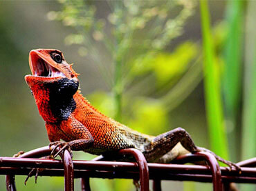 50 Most Beautiful Exotic Animals From the Tropics - Wow Amazing