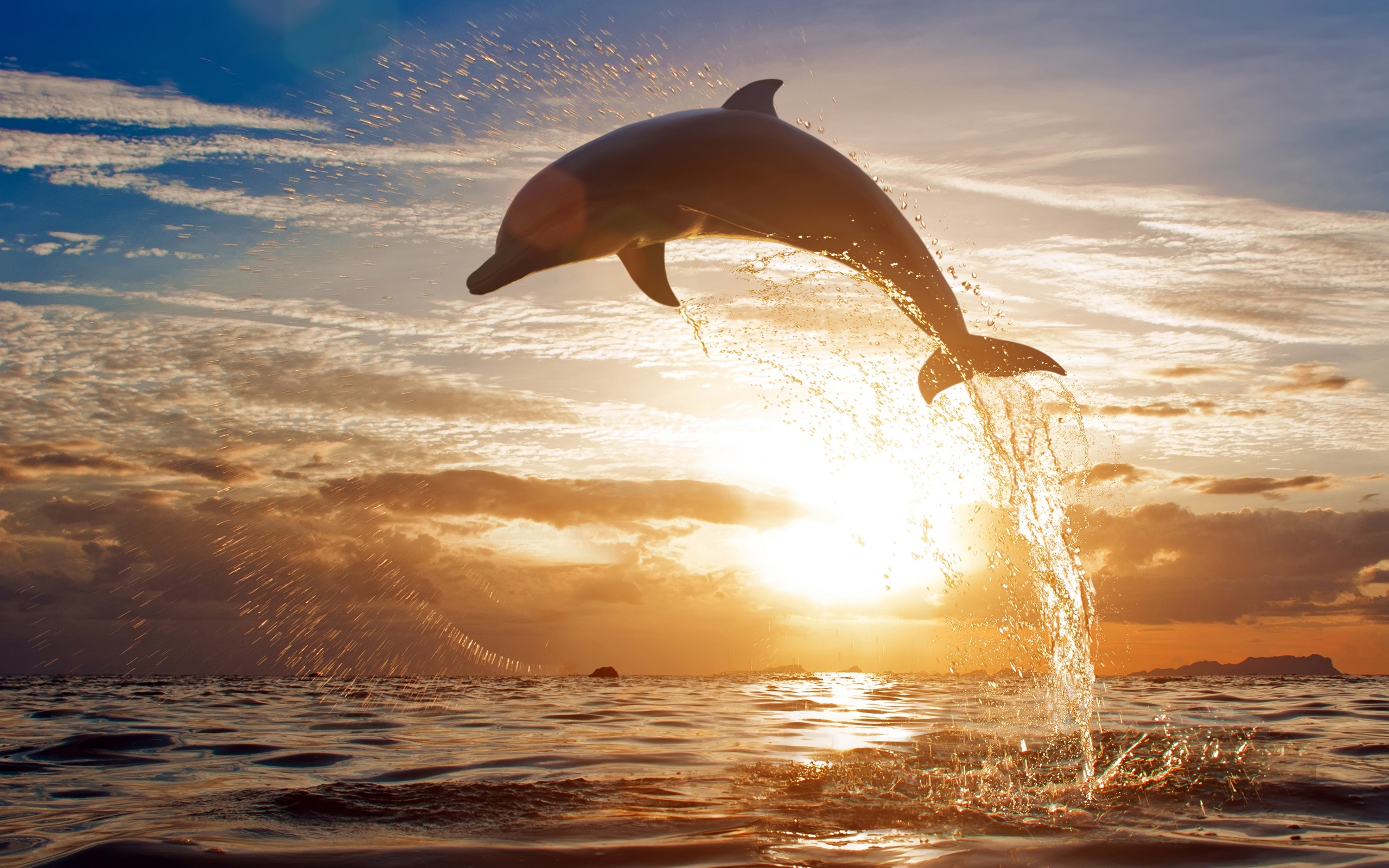 beach-wallpapers-dolphin-sunset-wallpaper-36946