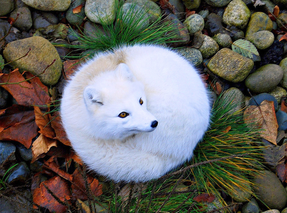 6 Charming Fox Species You Need To Know Wow Amazing