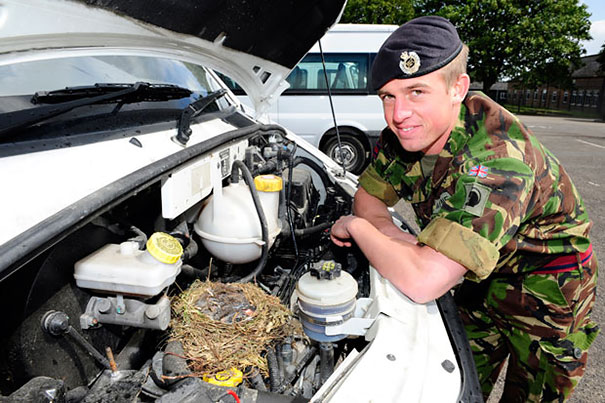 Nest In The Engine Of A Minibus