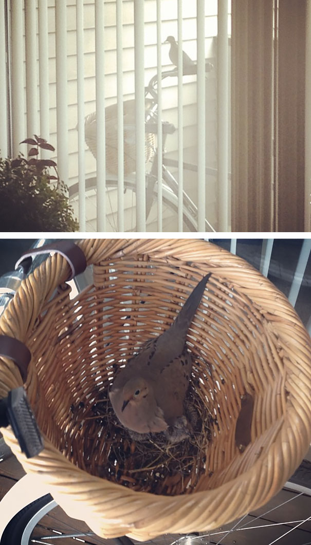 Dove Nest Inside Basket