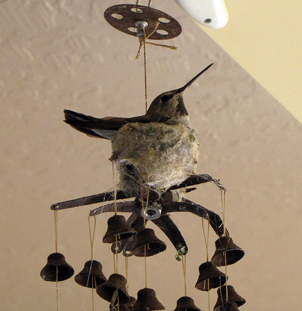 Hummingbird Nesting On A Patio Windchime