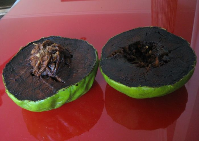 Black Sapote (chocolate Pudding Fruit)