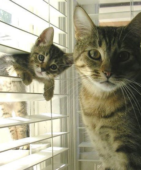 cat letting in her friend from window funny cat pics amazinganimalphotosdotcom