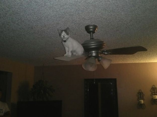 cat stuck on ceiling fan funny cat pics amazinganimalphotosdotcom