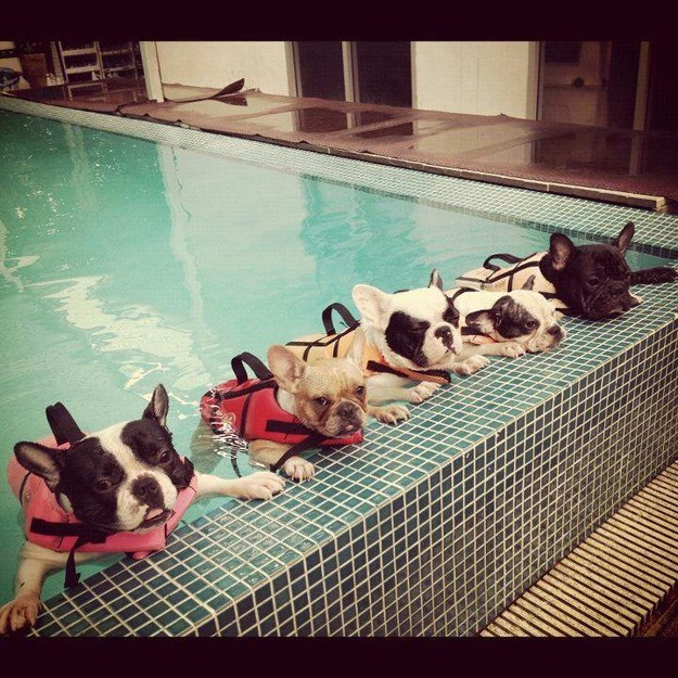 These pups at swim class.