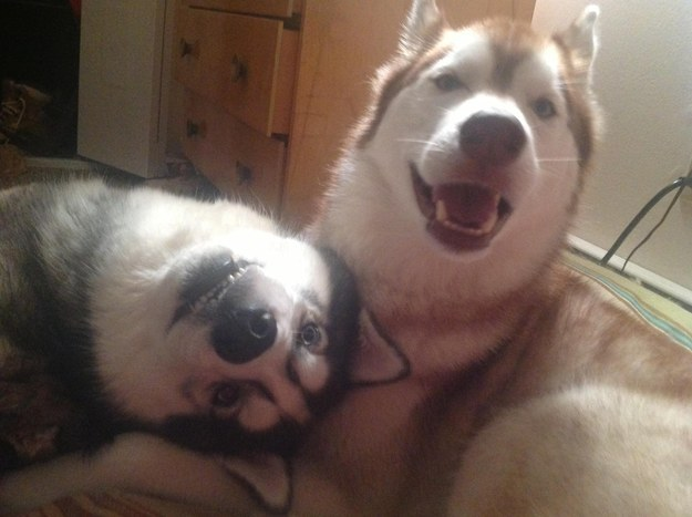 Sometimes dogs show their love by goofing around.