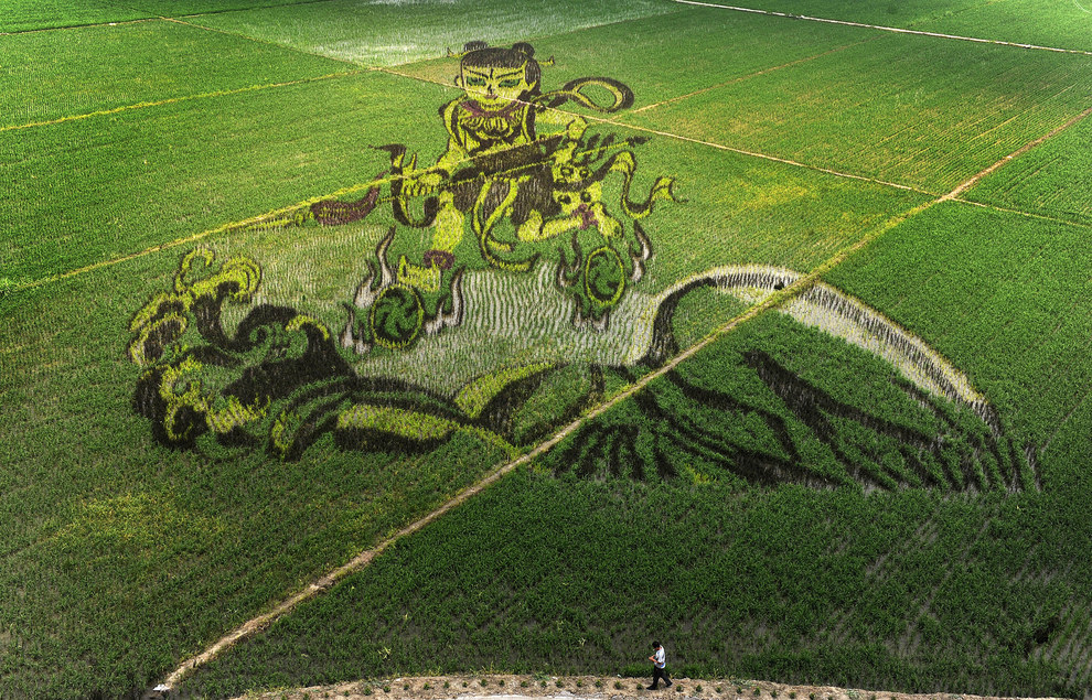The patterns that make the art look like more than just a field of rice is the result of different rices being planted — different colors and heights of rice are very deliberately chosen.