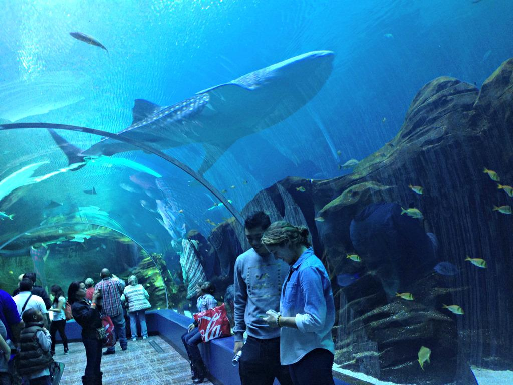 Georgia Aquarium Sets The Record As World's Largest ...