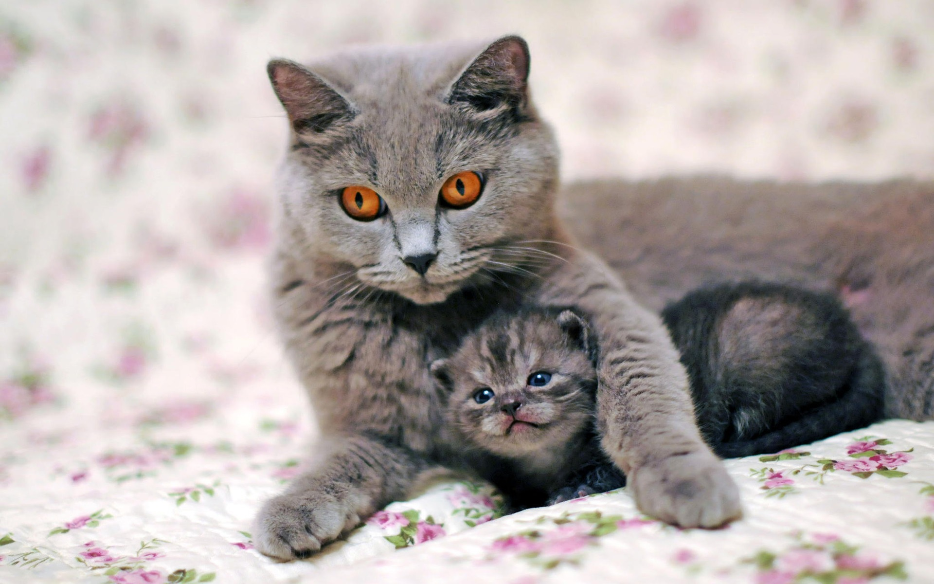 Mom For Dog And Cats