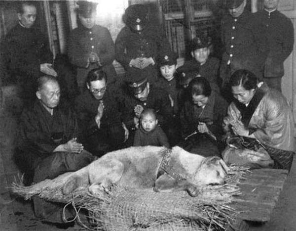 The beloved Hachiko before his burial.