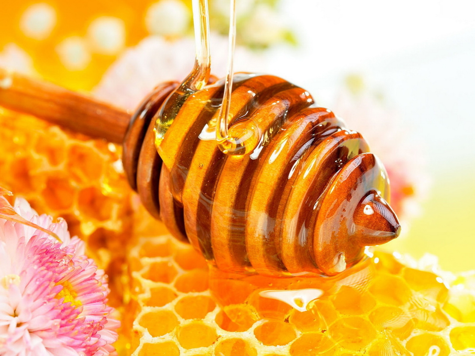 honey-bee-wallpaper-6