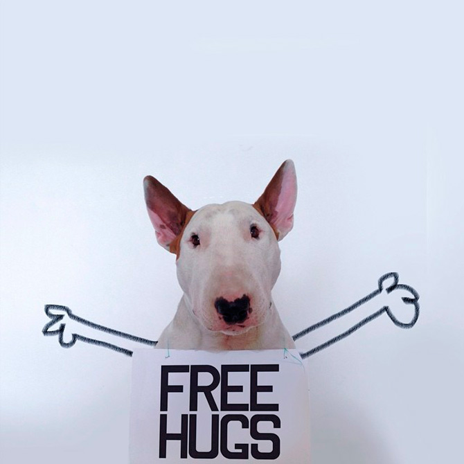 Jimmy Choo (The Bull Terrier)
