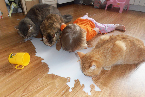 Cats Drinking Milk