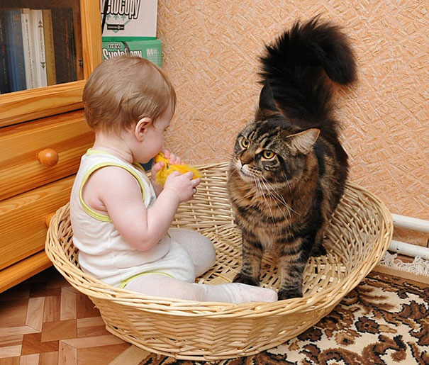 Child With His Cat
