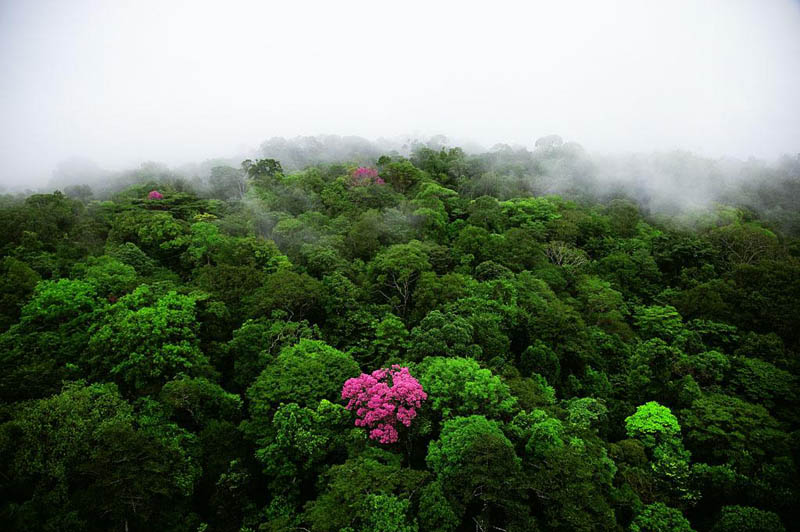 pink ebony on the kaw mountain french guiana 25 Mind Blowing Aerial Photographs Around the World
