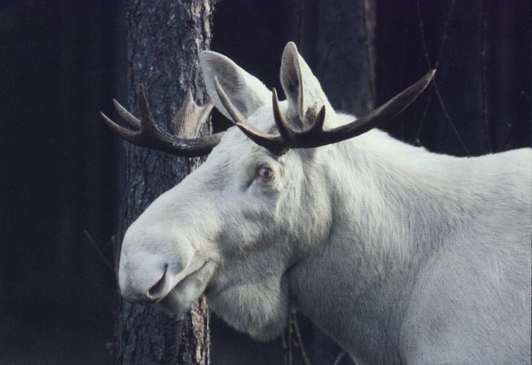 rare_white_animals_19