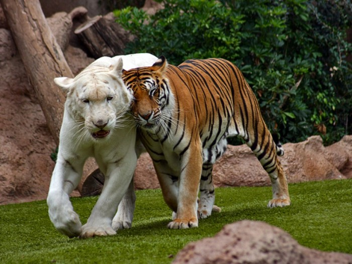 rare_white_animals_25