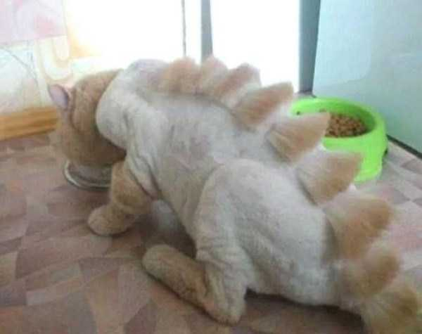 shaved-cats-17