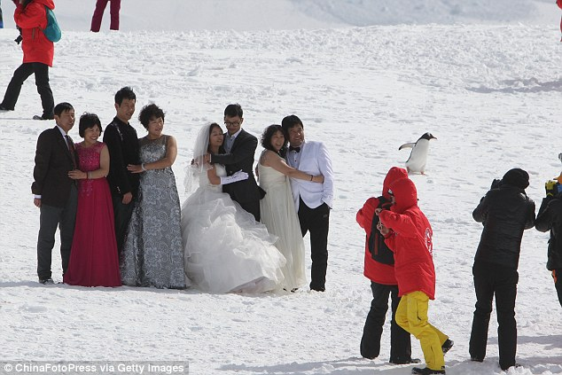 White wedding: There were no cold feet for this  couple - who posed up after their ceremony in Antarctica