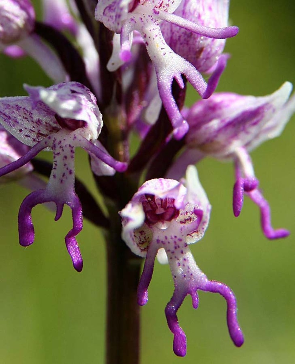 30 Flowers That Look Like They're From Another World