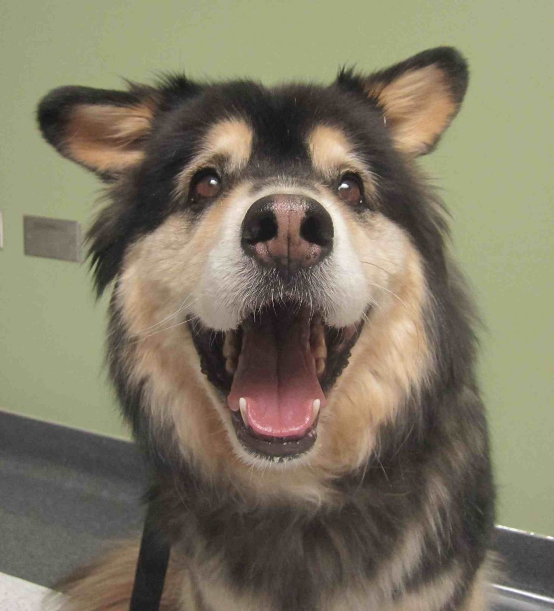 Amazing Com: Dogs Smile With Their Teeth And Look Too Cute In The